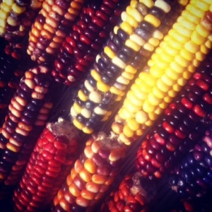 Indian corn at the Truro Ag Fair 2012