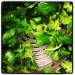Don't forget to wash the cilantro (coriander leaf) (image by Liz Cameron)