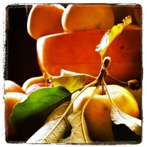 Imperfect Fuji apples in sunlight (image by Liz Cameron)