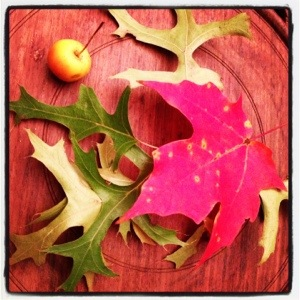 Leaves and crabapple on wooden tray (image by Esma, care of Liz Cameron)