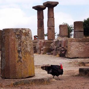 A turkey we saw strutting about at the Temple of Athena in Assos/Behramkale in June